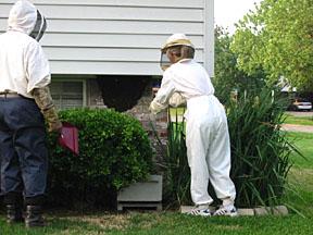 Bees_007_sm