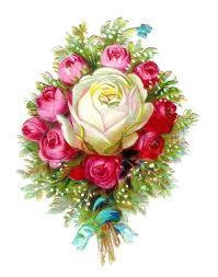 White rose1 (3)