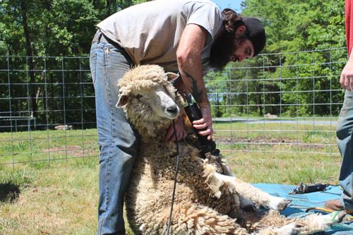 Shear3